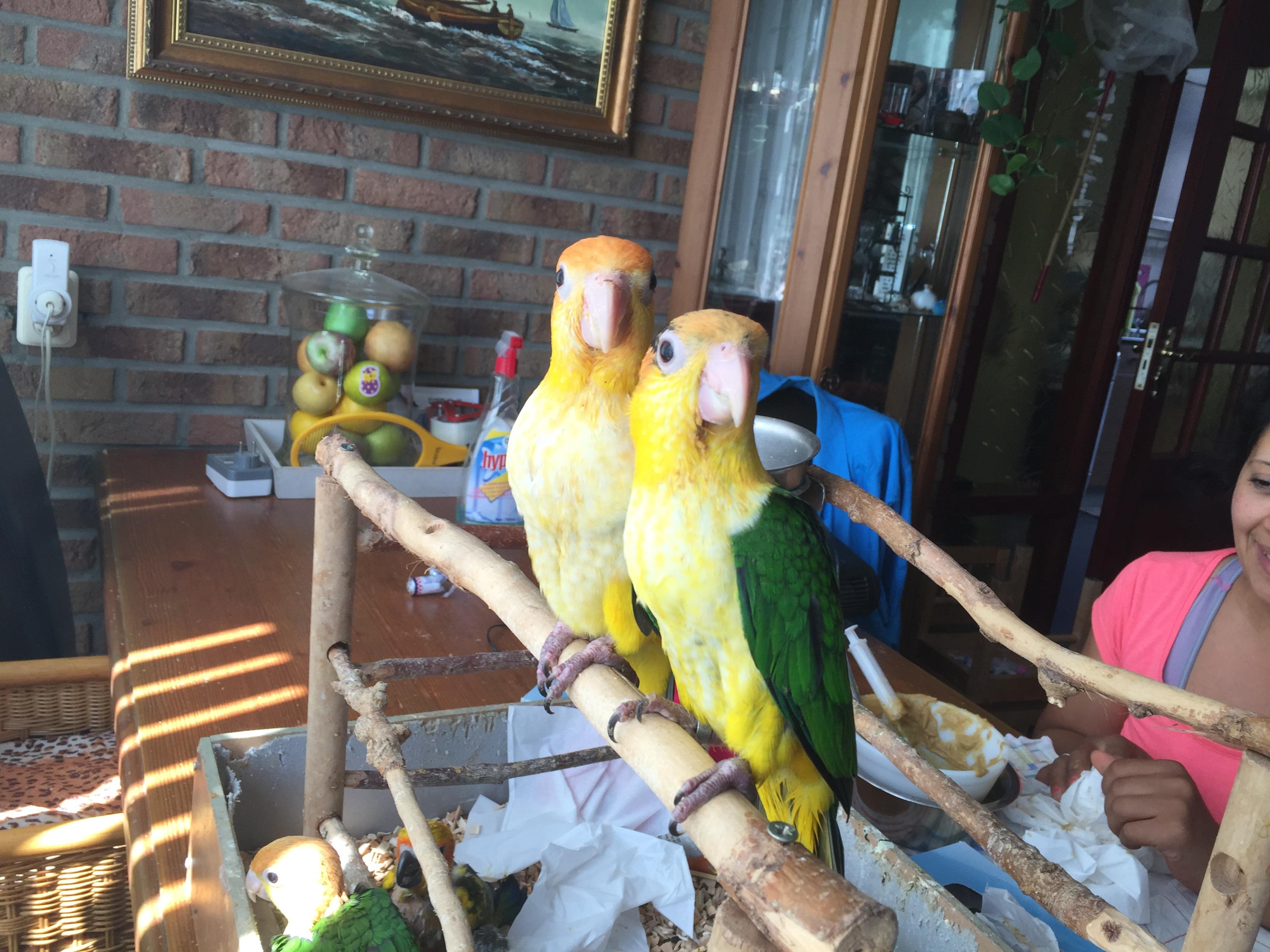 Wil ik echt een papegaai of parkiet in huis?