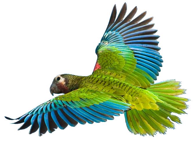 Ik wil een vogel met alle ramen open